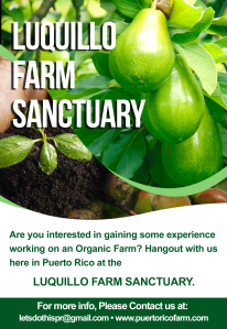 Come and Volunteer at the Luquillo Farm Sanctuary!