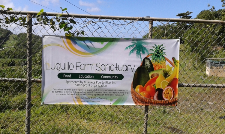 Here it is!  The Luquillo Farm Sanctuary....you thought we were joking!
