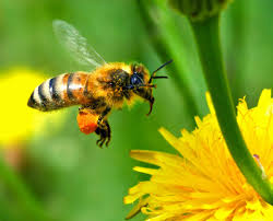 How to attract bees to your garden!